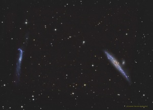 NGC 4631 and NGC 4656 - Whale and Hockey Stick Galaxies